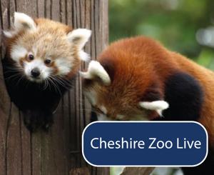 CheshireZooLive
